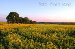 roge-landschaft-natur-062.JPG