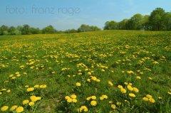 roge-landschaft-natur-078.JPG