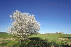 roge-landschaft-natur-083.JPG