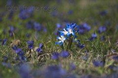 roge-landschaft-natur-127.JPG