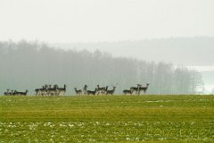 roge-landschaft-natur-178.jpg