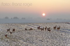 roge-landschaft-natur-193.JPG