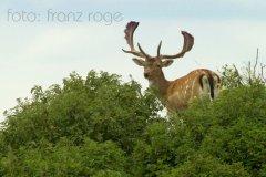 roge-landschaft-natur-194.JPG