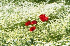 roge-landschaft-natur-199.jpg