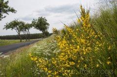 roge-landschaft-natur-201.jpg