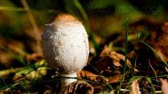 roge-landschaft-natur-216.jpg