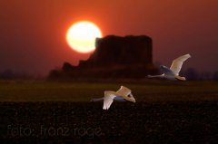 roge-landschaft-natur-219.jpg