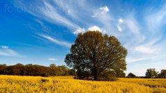 roge-landschaft-natur-220.jpg