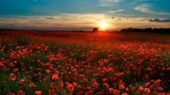 roge-landschaft-natur-223.jpg