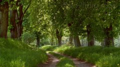 roge-landschaft-natur-226.jpg