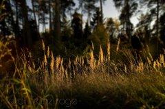 roge-landschaft-natur-230.JPG